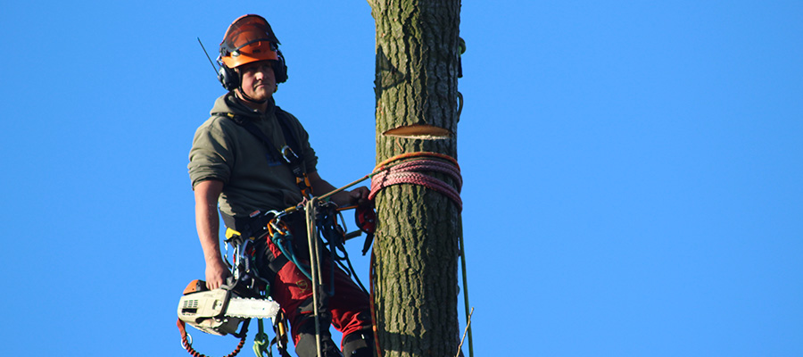 hogebomen