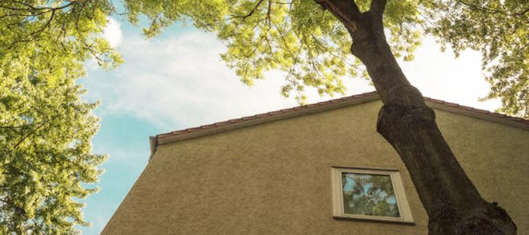 overhangendebomen